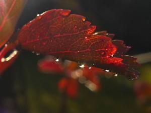 ...ist_das_Sonnenlicht_mild_und_warm_und_gelb...Foto_digital